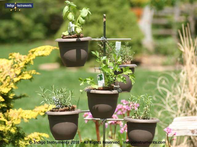 5 Piece Herb Garden