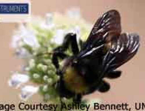 Bees-Rooftop and Garden Farming to the Rescue