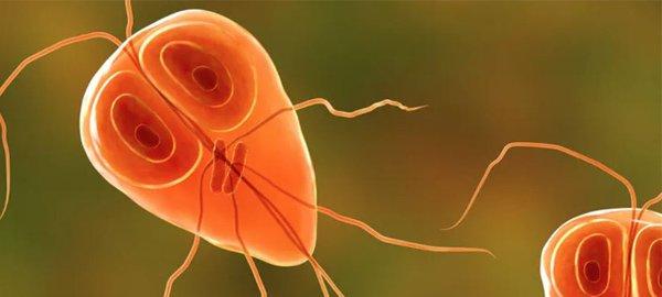parasite blog