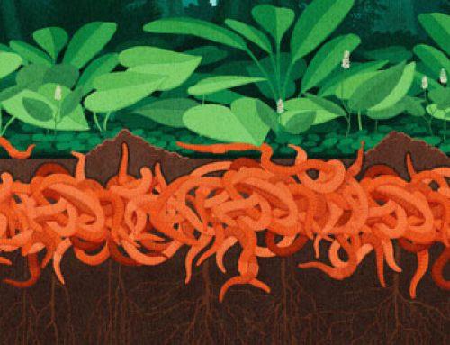 Cancel Earthworms