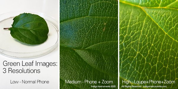 Phone Camera Loupe Magnified Green Leaf