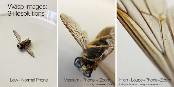 Phone Camera Loupe Magnified Wasp