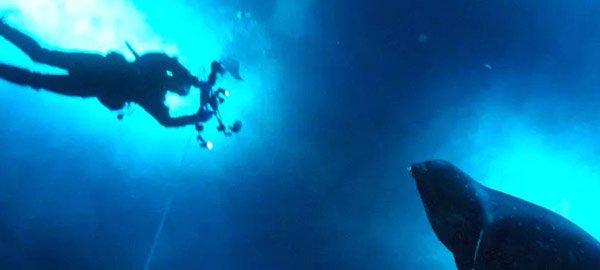 Seal sonar