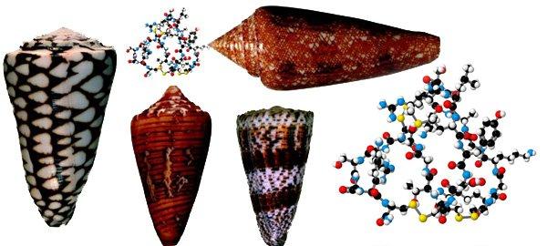 Cone Snail Ziconotide