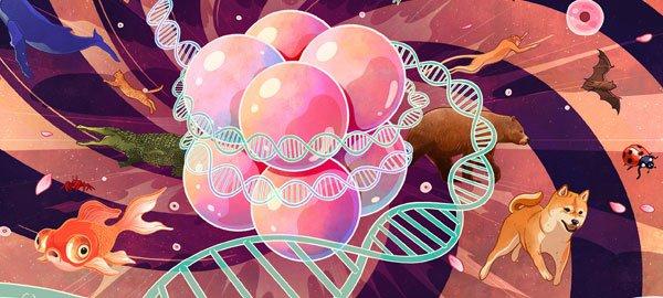 DNA Histone Blog